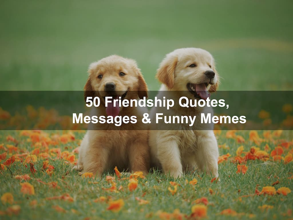 50 Friendship Quotes, Messages & Funny Memes